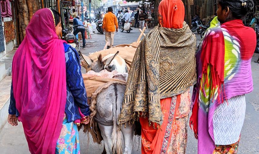 Sari ladies in Jodhpur